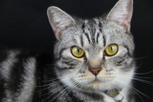 Kayc's cat